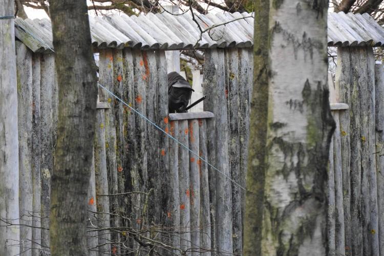 paint ball paintmine woods